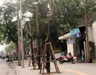 """Vụ """"chặt hạ 6.700 cây"""": Chủ tịch Hà Nội yêu cầu đình chỉ hàng loạt cán bộ"""