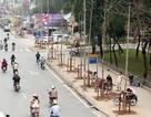 Chủ tịch Hà Nội yêu cầu đoàn thanh tra sớm làm rõ vụ thay thế cây xanh