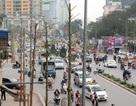 Hà Nội: Kế hoạch chi hơn 50 tỷ đồng cắt tỉa, thay thế cây xanh