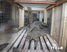 Hà Nội bảo tồn và cứu hộ hơn 300 cá thể động vật hoang dã