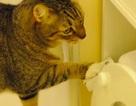 Mèo tự đi cầu rồi giật nước siêu... chuyên nghiệp