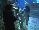 Cầu hôn trong bể cá mập