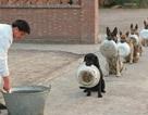 """Chó nghiệp vụ xếp hàng chờ """"chia cơm"""""""