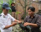 Phú Yên: Khẩn cấp chống dịch cúm gia cầm