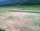 Hơn 18.000 hộ dân héo mòn vì thiếu nước giữa mùa nắng hạn