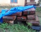 Mua bán trái phép gỗ trắc, doanh nghiệp bị phạt 100 triệu đồng