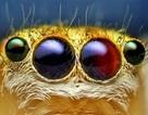 Góc nhìn mới lạ về những loài côn trùng