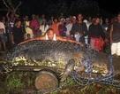 Philippines bắt sống cá sấu nặng trên 1 tấn