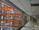 Trường gắn rào sắt ngăn học sinh tự tử trước kỳ thi đại học