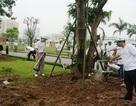 Hà Nội: Trồng cây xanh hưởng ứng ngày Môi trường thế giới