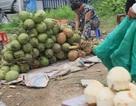 Thực phẩm bẩn tràn lan, nhiều địa phương chưa mặn mà vào cuộc