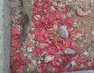 Hưng Yên: Cận cảnh xác pháo đỏ đường ngay sát trụ sở ủy ban xã
