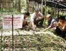 Vì sao UBND tỉnh và Sở KH-ĐT Quảng Nam bị kiện ra tòa?