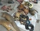 Việt Nam có thêm trạm cứu hộ động vật hoang dã