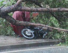 14 người chết và mất tích, 225 người bị thương sau bão