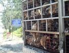 Việt Nam tích cực chống nạn buôn lậu chó xuyên quốc gia