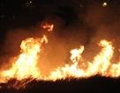 Liên tiếp cháy đồng cỏ trên đất dự án rộng hàng chục hecta
