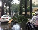 """Hình ảnh trận cuồng phong """"hoành hành"""" khắp đường phố Sài Gòn"""