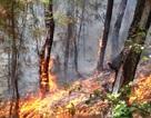 Vắt kiệt sức chữa cháy rừng thông giữa trưa nắng