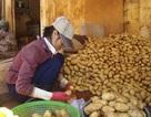 Ảnh cách biến khoai tây Trung Quốc thành hàng Đà Lạt