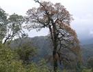 Lào Cai: Đã khống chế được đám cháy rừng quốc gia Hoàng Liên