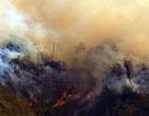 Hơn 300 người đang dập lửa cháy rừng quốc gia Hoàng Liên