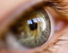 Giúp người mù thấy lại từ tế bào gốc