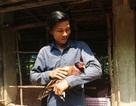 Cử nhân nuôi chim trĩ
