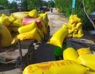Lúa, khoai tăng giá: Kẻ buồn, người vui