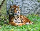 13 quốc gia họp bàn nhằm bảo vệ Hổ