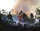 Đà Nẵng lại cháy rừng