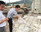 Nhập phế liệu gây ô nhiễm, một doanh nghiệp bị phạt 100 triệu đồng