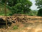 Vụ nghi án oan sai ở Thái Nguyên: Con dại, cái mang?