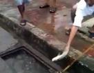"""Màn bắt cá dưới hố ga """"siêu đẳng"""" trên phố Hà Nội"""