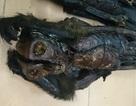 Rùng mình 20 xác linh trưởng chết khô vận chuyển lậu trên xe khách
