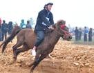 Xem vó ngựa Bắc Hà đua tranh gay cấn ngay tại Hà Nội