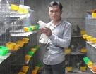 Thu nhập tiền tỉ từ nghề nuôi chim