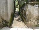 Nhiều uẩn khúc trong vụ kiện đòi ngõ đi tại huyện Xuân Trường