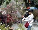Chợ hoa cổ Hà Nội qua ống kính độc giả
