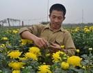 Khu trồng hoa Mê Linh: Rộn ràng ngày cuối năm