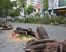 Mưa lớn, cây bật gốc đè chết người giữa Sài Gòn