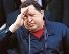 """Sức khỏe của Tổng thống Chavez """"mong manh"""""""