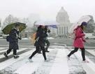 Nhật: Giao thông hỗn loạn vì bão tuyết lịch sử, 3 người chết