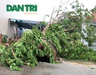 Hàng loạt cây xanh bật gốc sau bão: Kiểm điểm, làm rõ trách nhiệm