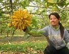 Vườn phật thủ giá 400 triệu đồng