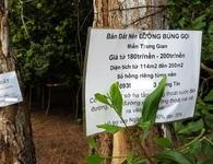 Hoang tàn sau cơn sốt: Phú Quốc ngàn mảnh đất hoang