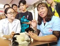 Huế: Tânsinh viên ngành Thú y tò mò xem cách chữa bệnh cho thú cưng