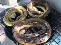 """""""Sởn da gà"""" ăn món rắn lục đuôi đỏ… nướng trui"""