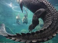 """Du khách chi tiền triệu thử cảm giác đối diện với """"thủy quái"""" dài 5m"""