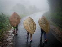 Đến thăm ngôi làng có lượng mưa nhiều nhất thế giới